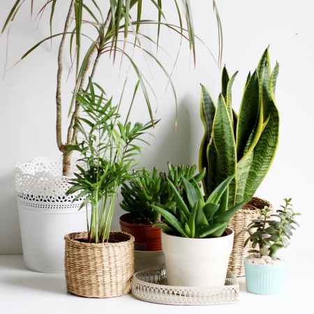 indoor plants in Chennai