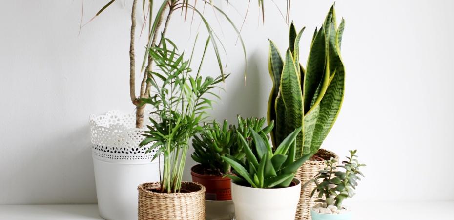 indoor plants in Chennai