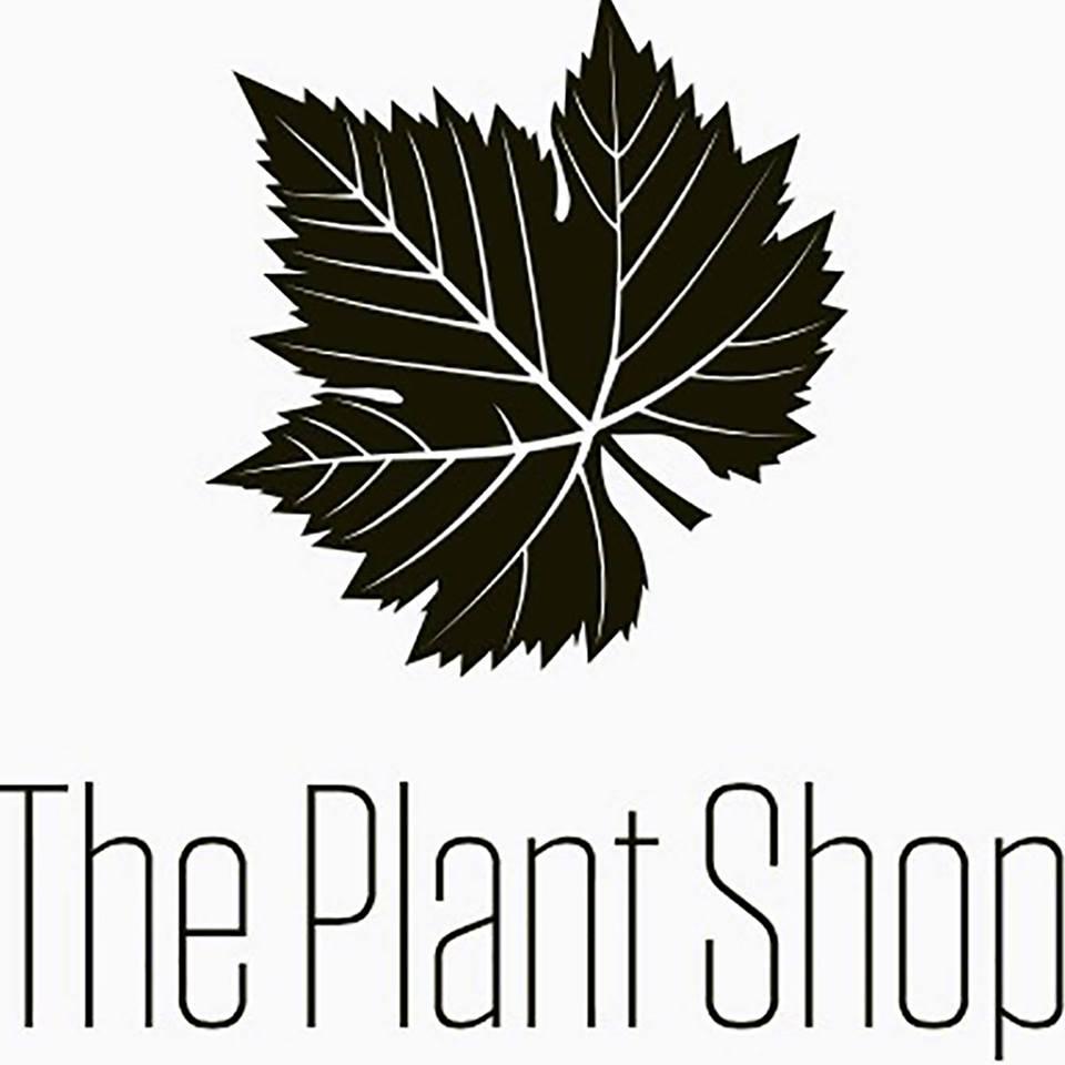 plants nursery succulents cactus flowering and non flowering plants indoor and outdoor plants